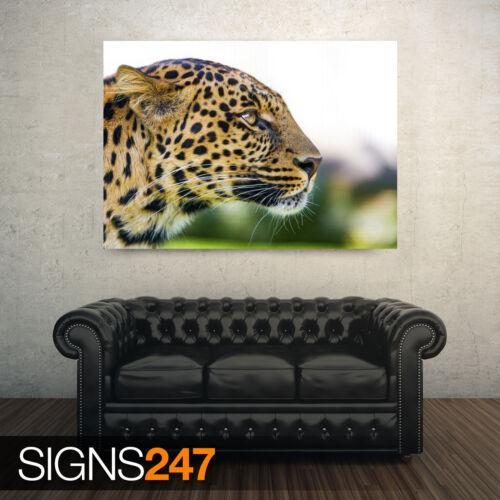 3803 Animal Photo Picture Poster Print Art A0 A1 A2 A3 A4 BIG CAT LEOPARD