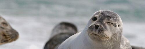 Wackel Winking Seal Lesezeichen: zwinkernder Seehund 3 D // Lentikular