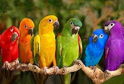 3 D Ansichtskarte Papageien Ara Postkarte Wackelkarte Hologrammkarte Bild neu
