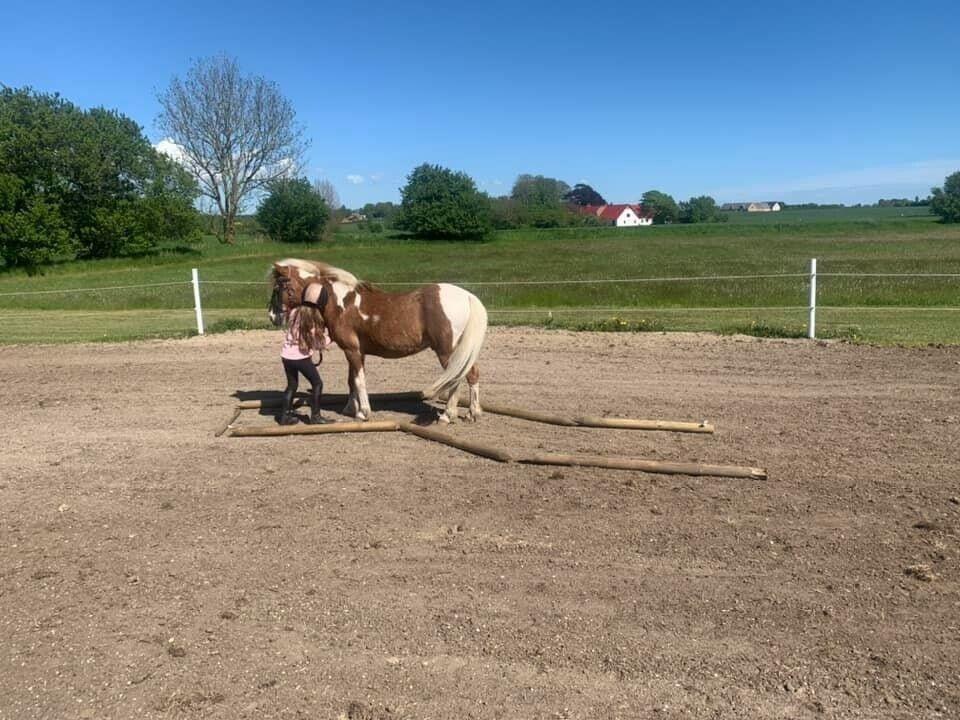 Blanding, pony, 13 år, 120 cm