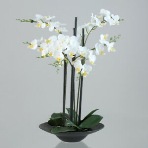 Orchidee Kunstpflanze Phalaenopsis Creme 50cm In Schwarzer Schale Ebay