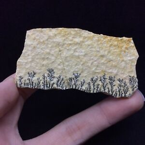 Rocks, Fossils & Minerals Collectibles Dendritic Picture Jasper Stone Slab 180330 Earth Connection Stone Metaphysical Buy One Get One Free