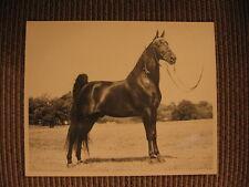 "Tennessee Walker / Walking Horse ""Sun's Big Shot"" Orig. Photo Sire: Midnight Sun"