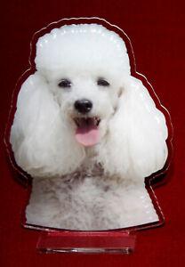 statuette-photosculptee-10x15-cm-chien-caniche-8-dog-hund-perro-cane