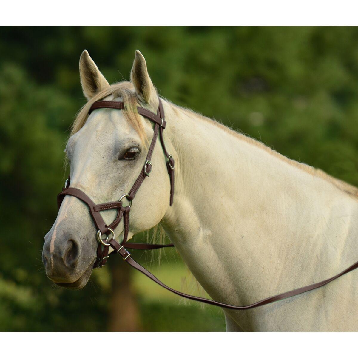 Inglés o caballo occidental Negro Cuero Bitless Brida Bitless & Juego Riendas