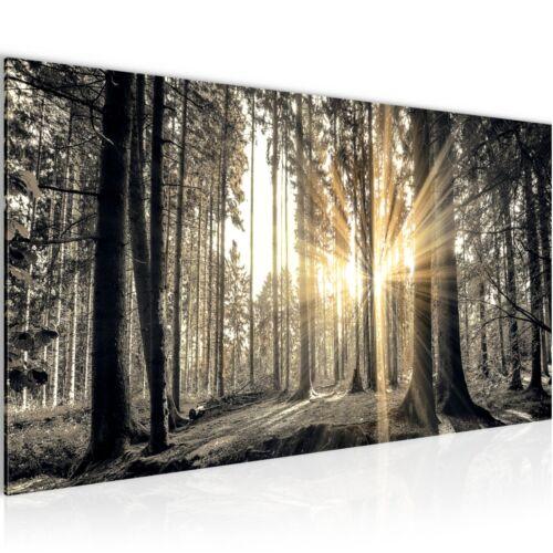 Bild Bilder Wandbild XXL 100x40 cm Wald Wanddeko Kunstdruck Leinwand Vlies