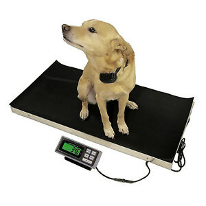 Large-Veterinary-Scale-700lb-x-0-2lb-Tree-LVS-700-Livestock-Animal-Pet-Vet-Floor