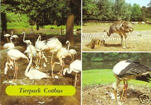 AK-Cottbus-Im-Tierpark-drei-Abb-1986