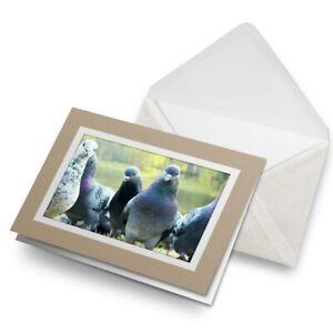 Greetings-Card-Biege-Flock-Of-Pigeons-Bird-Pigeon-15735