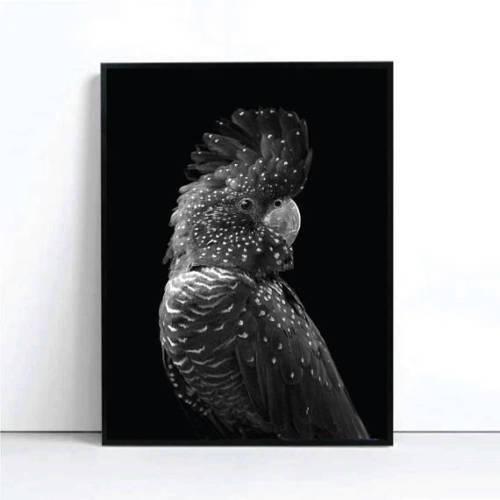 MOUNTED CANVAS Black Cockatoo Art Print Poster Block Black Cockatoo Bird Mono