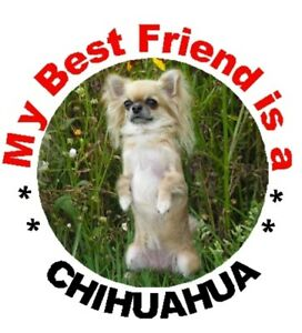 2-Chihuahua-Car-Stickers-By-Starprint