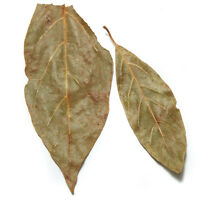Avocado Leaf - 8 Oz - Avocado Leaves -hojas De Aguacate