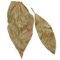 Avocado Leaf - 2 Oz - Avocado Leaves -hojas De Aguacate