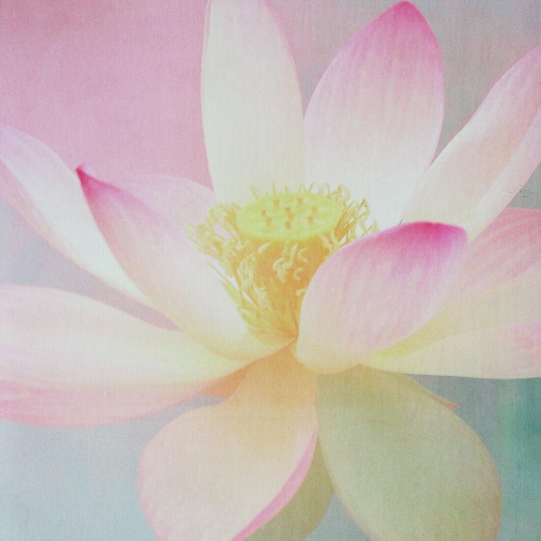 Premium Yoga Mat – Supreme Eco Lotus, Eco Supreme Friendly 48a8c9