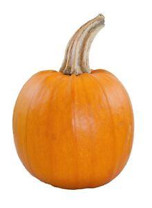Pumpkin-Small-Sugar-Pie-Non-GMO-Heirloom-Garden-Vegetable-Seeds-Sow-No-GMO-USA