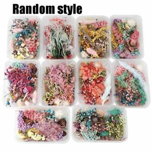 1Box Making Pendant Real Dried Flowers Jewellery For DIY Art Epoxy Resin Craft