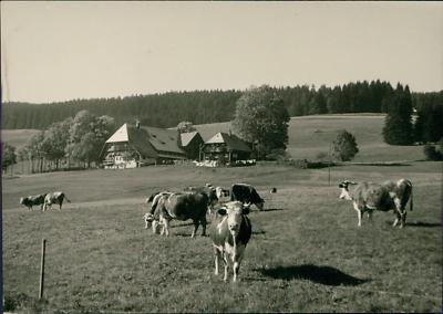 Deutschland, Titisee (schwarzewald) Vintage Silver Print. Germany. Legend On