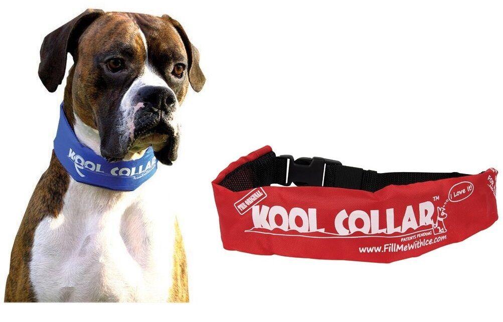 Cool Kragen für für für Hunde - Freezable Wieder Verwendbarer - Sicher & Komfortable     | Outlet  94f0be