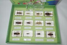 12 Insect Specimen Box Set D TES4 in 12 blocks Real Insect Education Aids