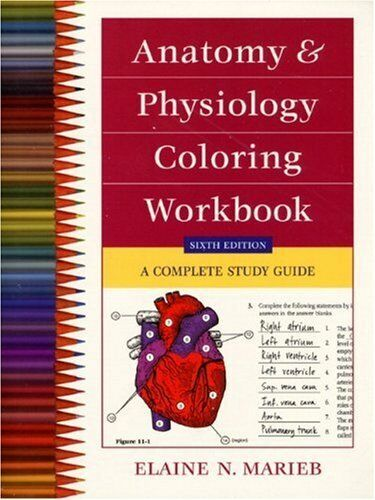 Anatomy and Physiology Coloring Workbook : A Complete Study Guide by Elaine  N. Marieb (1999, Paperback)