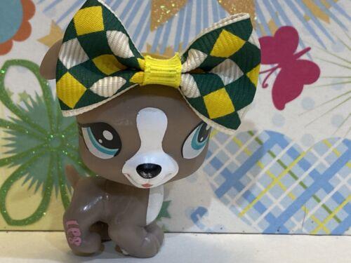Littlest Pet Shop 1463 Gray Boxer Jack Russell Puppy Dog LPS