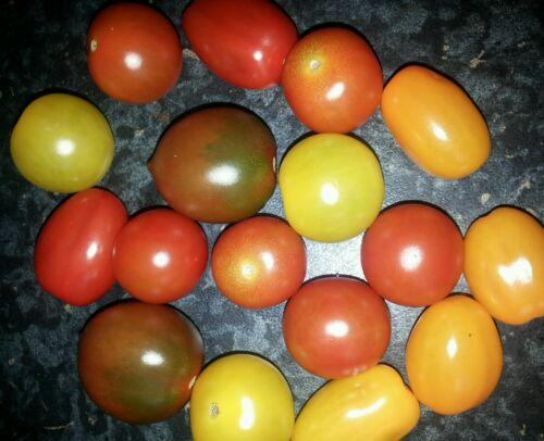 dunkle 30 Samen verschiedene Party Mini- Mix Tomaten...gelb orange rot