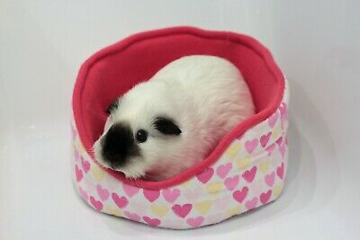 Cuddle cup for guinea pigs,rats,hedgehogs and other small animals