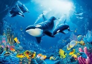 Photo wallpaper killer whale orca wall mural 366x254cm blue sea life image is loading photo wallpaper killer whale orca wall mural 366x254cm altavistaventures Images