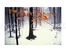 "WINSTON DAVID LORENZ - QUIET WOODS - ART PRINT POSTER 11"" X 14"" (690)"