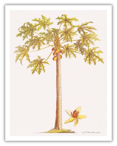 Papaya Tree Hawaii Botanical Fruit Aloha Maui Vintage Art Poster Print Giclee
