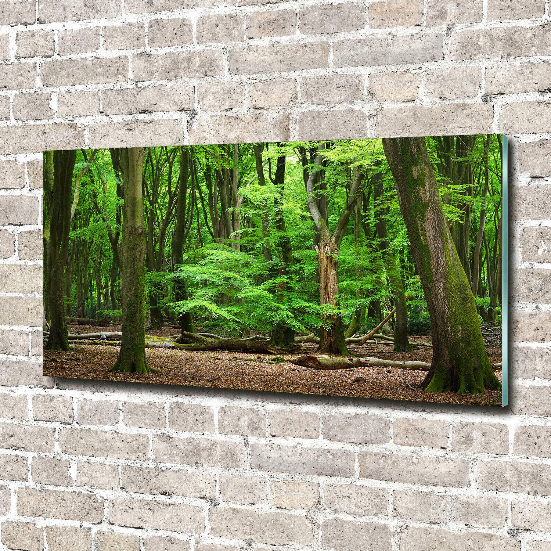 Glas-Bild Wandbilder Druck auf Glas 140x70 Deko Landschaften Niederlande Wald