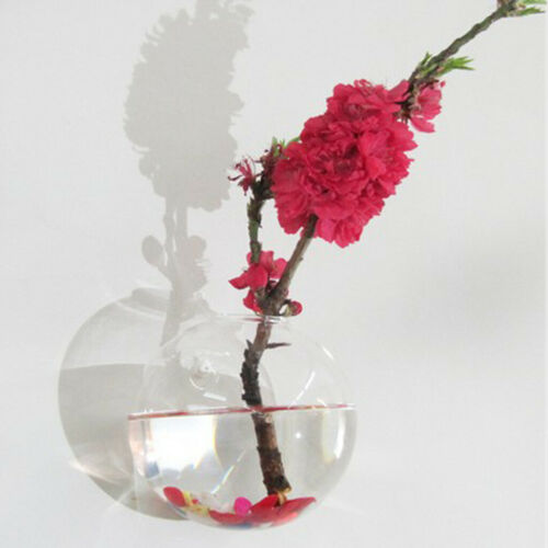 6 x Wandbehang Pflanzgefäße Glas Blumentopf Luft Pflanze Terrarium Wasser