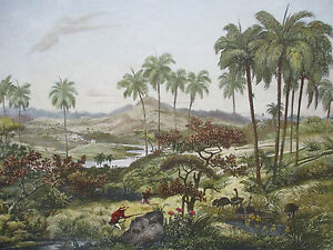 Mortiz Rugendas: Brasil View Campos Hunting - 1835 (1986)