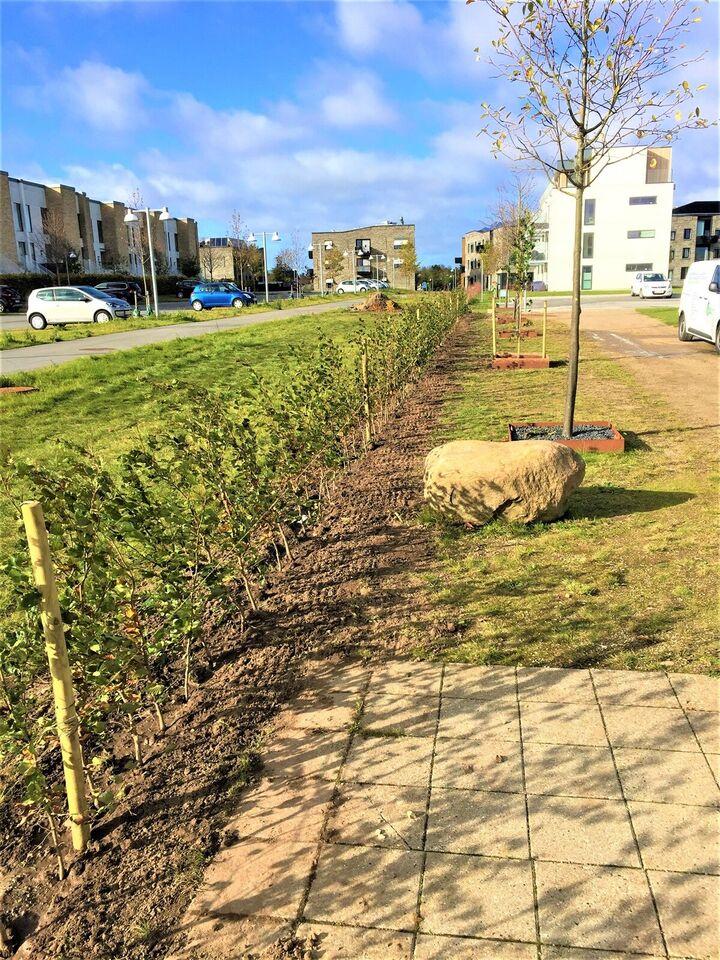 Anlæg af hække, buske og træer