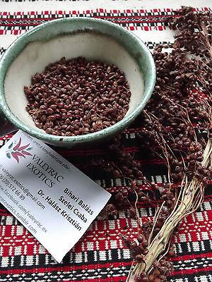 Black amber 50+ Seeds Sorghum bicolor Sweet sorghum Black sorghum