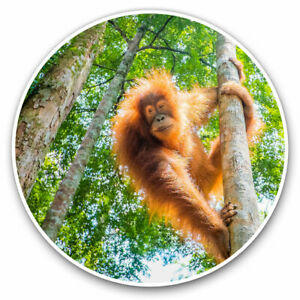 2-x-Vinyl-Stickers-7-5cm-Orangutan-in-Jungle-Indonesia-Cool-Gift-3539