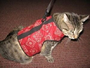 Kitty-Holster-Cat-Harness-Several-Sizes-and-Colors-to-Choose-From-Made-USA
