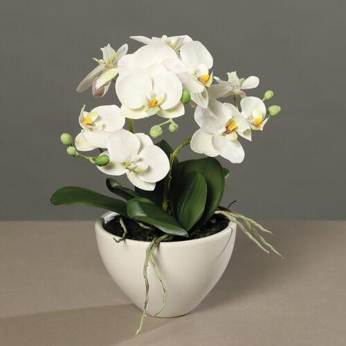36 cm Art Fleur Artificielle Orchidée Phalaenopsis crème en blancs keramiktopf H