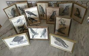 Huge Lot Vintage Gold Metal Picture Art 5x7 Frames Ornate Bird Prints Boho Decor