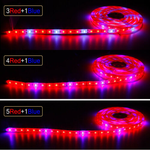 5050 300LED Grow lights red:Blue DC12V 3:1,4:1,5:1 led strip For Plant Growing