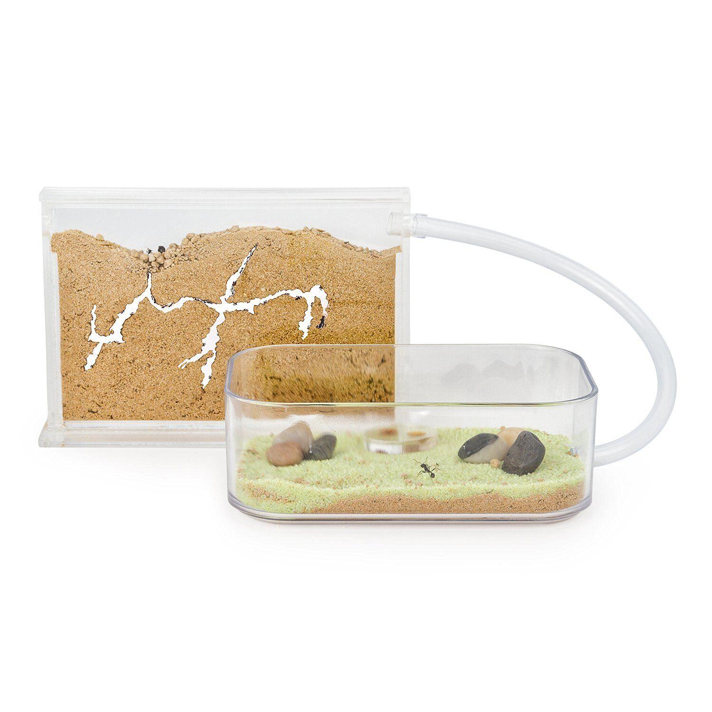 Sand ameisenfarm basic (ameisenhaufen, formicarium, bildung, ameisen)