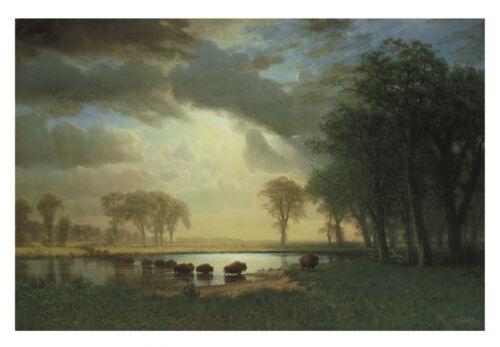 The Buffalo Trail c.1867 by Albert Bierstadt Art Print Landscape Poster 11x14