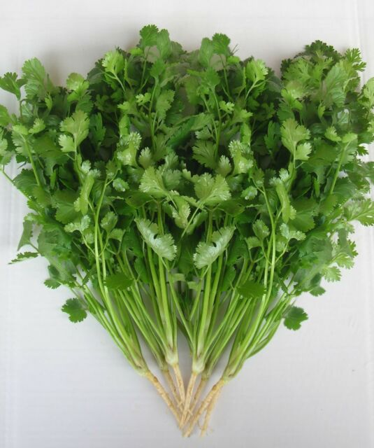Coriander Green aroma  -   Appx 500 seed  - Herbs