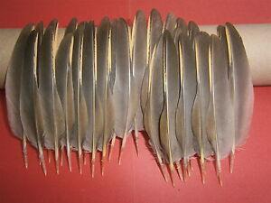 "30 French Partridge Flügel Feder Federn 4.5"" - 5"" ~ Fly Tying Handarbeit Schmuck"