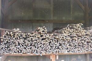 5 Vintage Primitive Tobacco Sticks from Kentucky Farm #S179WS