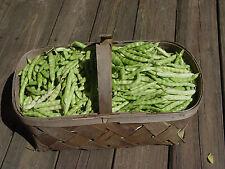 Heirloom Western NC White Greasy Cornfield Green Beans Seeds 200+ 2016 new