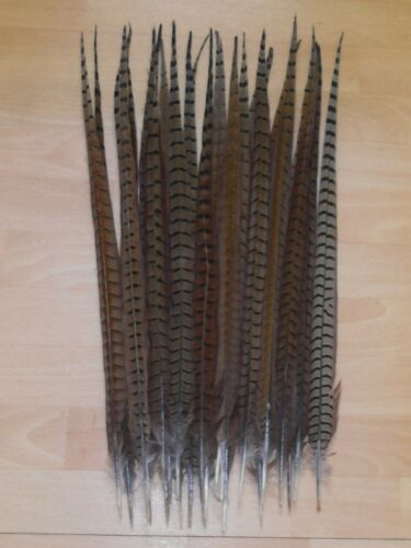 """25 COCK PHEASANT TAIL FEATHERS 22/""""to23/""""FLY TYING ART/& CRAFT FLORAL DISPLAY HATS"""