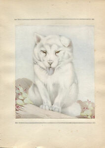 E J Detmold Vintage Print The Samoyede -The Book of Baby Dogs 1929
