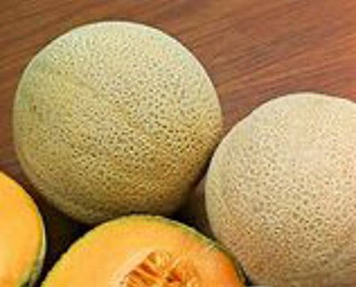 VEGETABLE  MELON CANTALOUPE  HALES BEST JUMBO  100 SEEDS