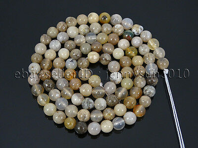 Natural Oceam Fossil Coral Agate Gemstone Round Beads 15.5'' Strand 4mm 6mm 8mm